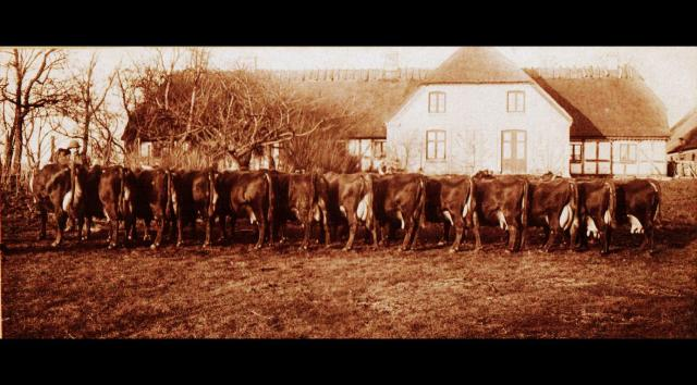 Ryslingestammen 1901 - Brænderupgård