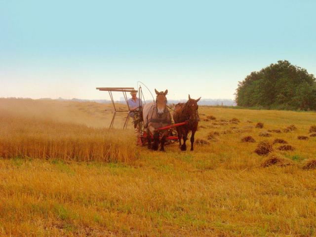 Binderhøst 2006