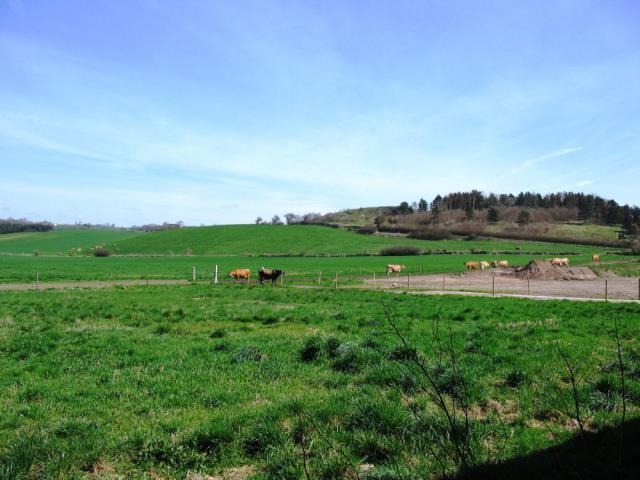 Steensgård - udsigt ud over markerne