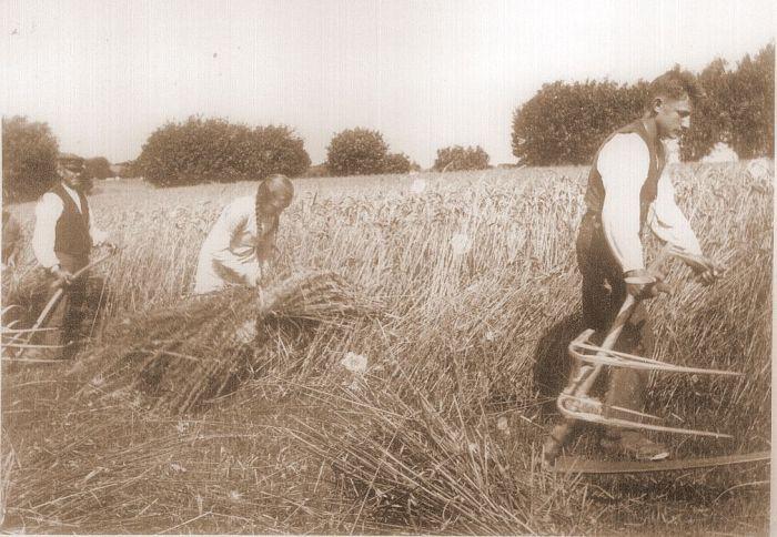 Rughøst på Midtfyn