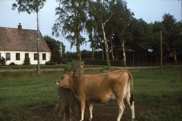 Nygård i Rødme - hvor kvien står skal soveværelset have været i den gamle gård