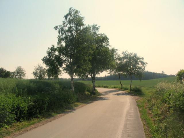 Birkealléen ved Stågerup