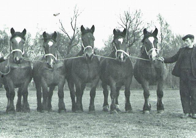 Hesteholdet på Holevgård