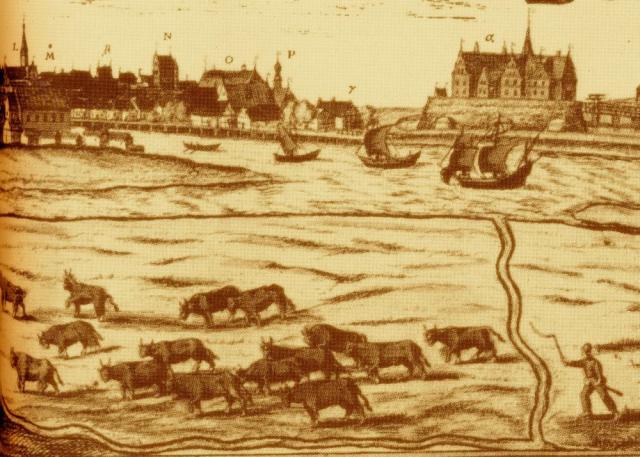 Studedrift ved Ribe i 1580erne
