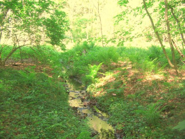 Vand fra kilde i Mændenes Skovløkke