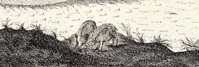Danske svin som tegneren så dem ca 1760, krumryggede med stive børster som en kam hen ad ryggen